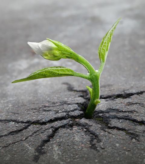 cette-petite-fissure-dans-un-trottoir-est-tout-ce-dont-cette-pousse-a-besoin-pour-se-developper